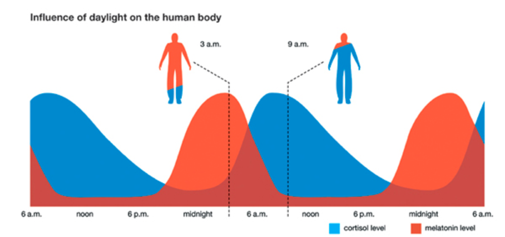 Opposing relationship between cortisol and melatonin in the body.