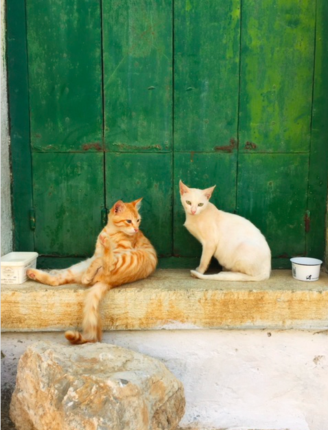 Symi cats hanging along the Kali Stratas