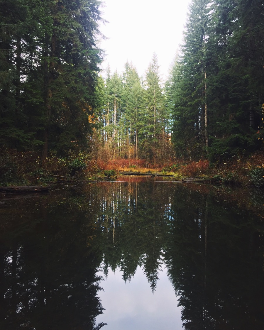 Soaking in the wisdom of the trees, on Vancouver Island, Canada. November 2018.