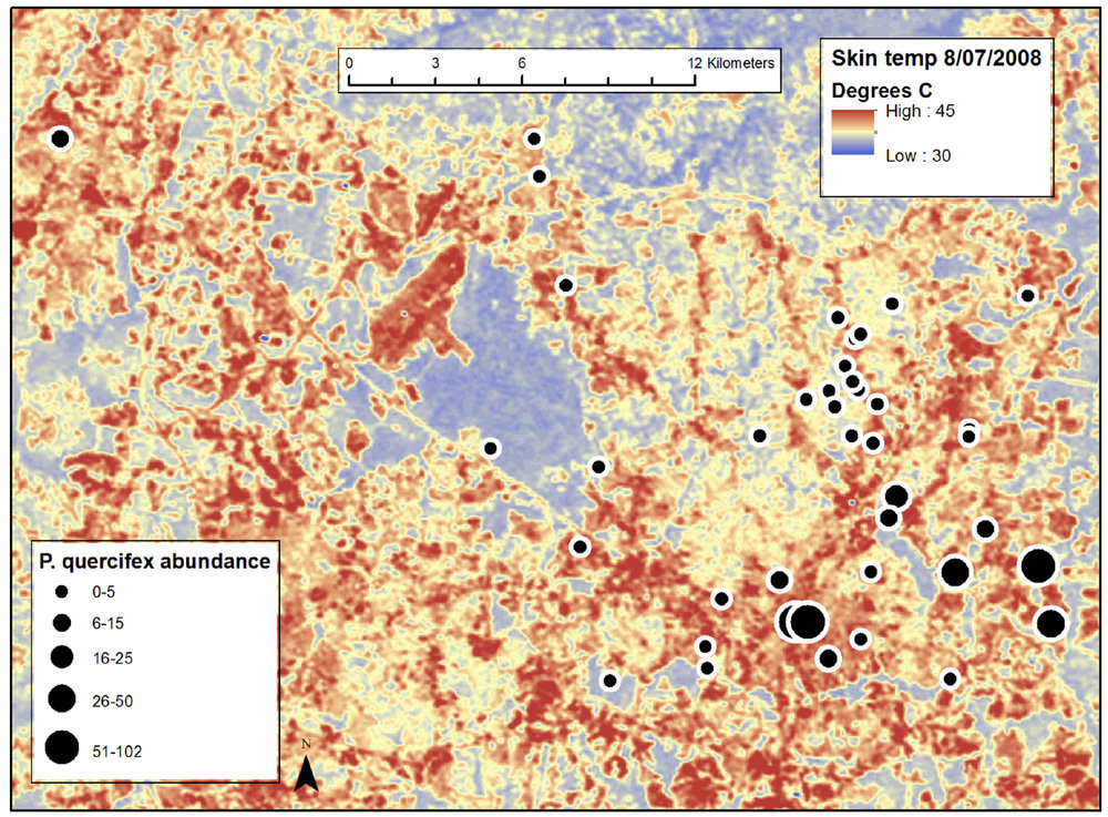 This shows the mosaic pattern of urban warming across the Raleigh, NC, USA urban heat island. The map was created from satellite measurements of surface temperature. The dots represent study sites, and their size represents insect pest abundance on street trees. Reproduced from: Meineke EK, Dunn RR, Sexton JO, and Frank SD. 2013. Urban warming drives insect pest abundance on street trees.  PLoS ONE , 2013; 8 (3), doi:10.1371.journal.pone.0059687.