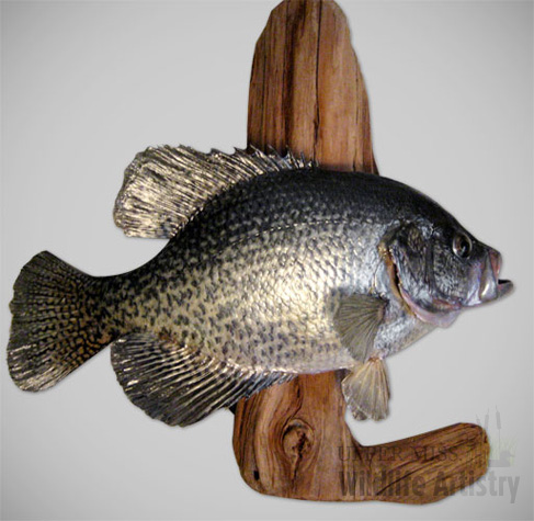 fish_crappie_black.jpg