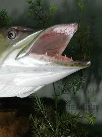 fish_muskiemouth.jpg