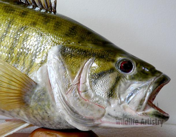 fish_smallmouth_repro2.jpg