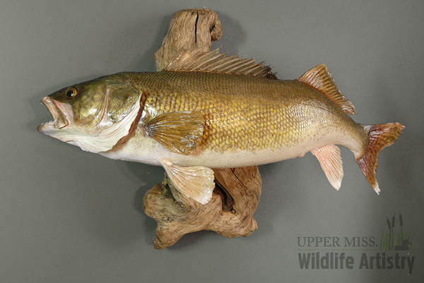 fish_walleye_wood.jpg
