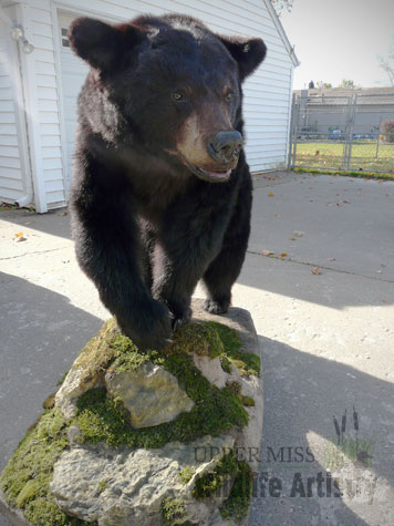lifesize_bear1.jpg