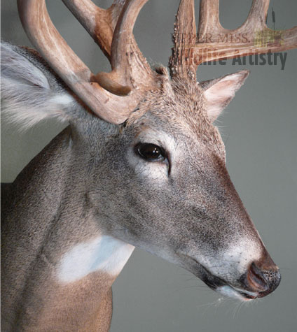game_buck_whitetail3_detail.jpg