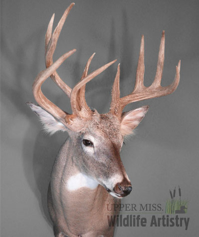 game_buck_whitetail3.jpg