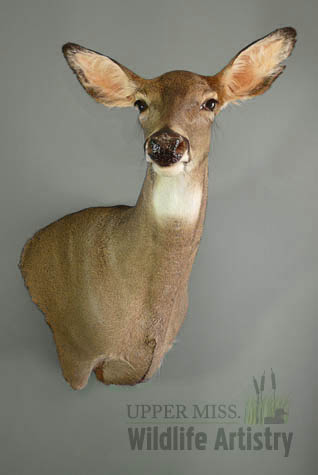 game_doe_whitetail.jpg