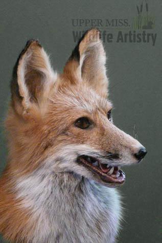 game_fox_2.jpg