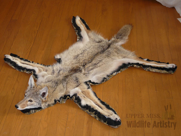rugs_coyote_full.jpg
