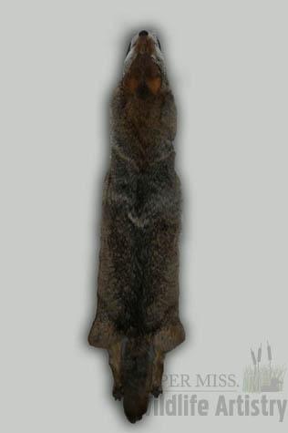 rugs_coyote_skin.jpg
