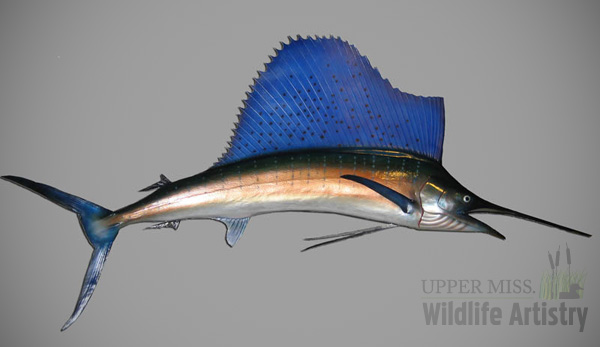 fish_sailfish.jpg