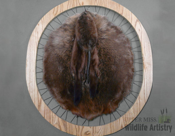 Beaver Hoop with Mink and Muskrat