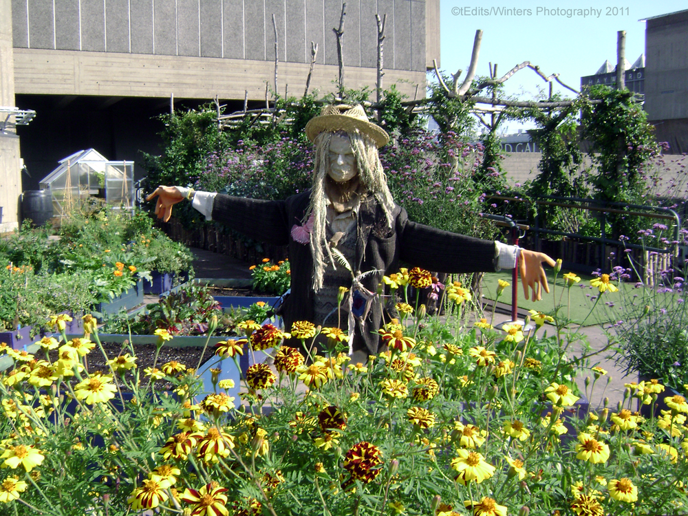 the-scarecrow.png
