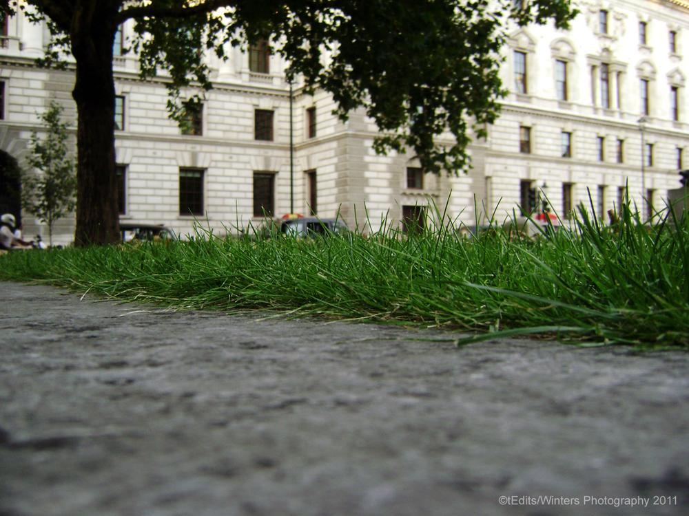 grass-blades.png