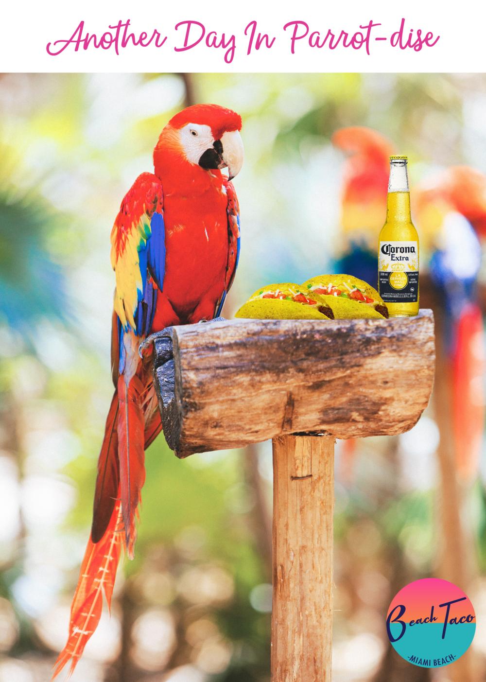 Parrotdise-2.png