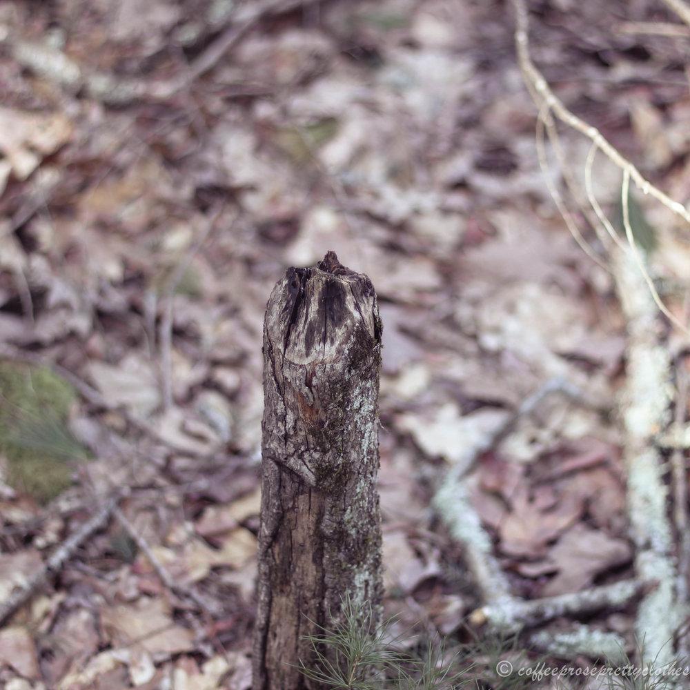 Milford, PA nature walk hike