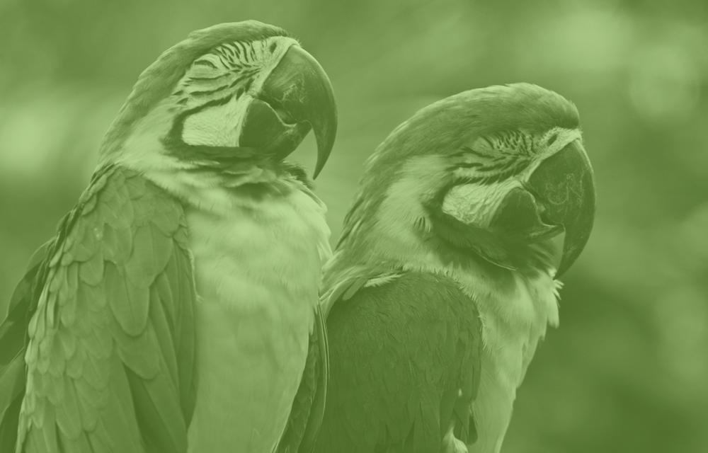 Green_Birds.png