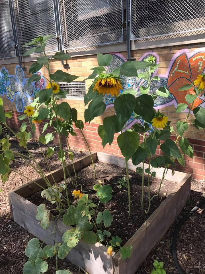 Building gardens