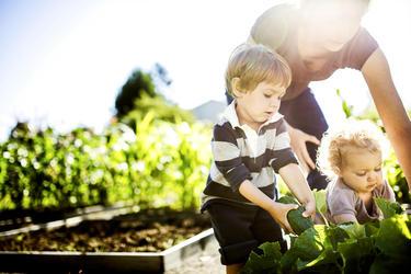 Vegetable Picking.jpg