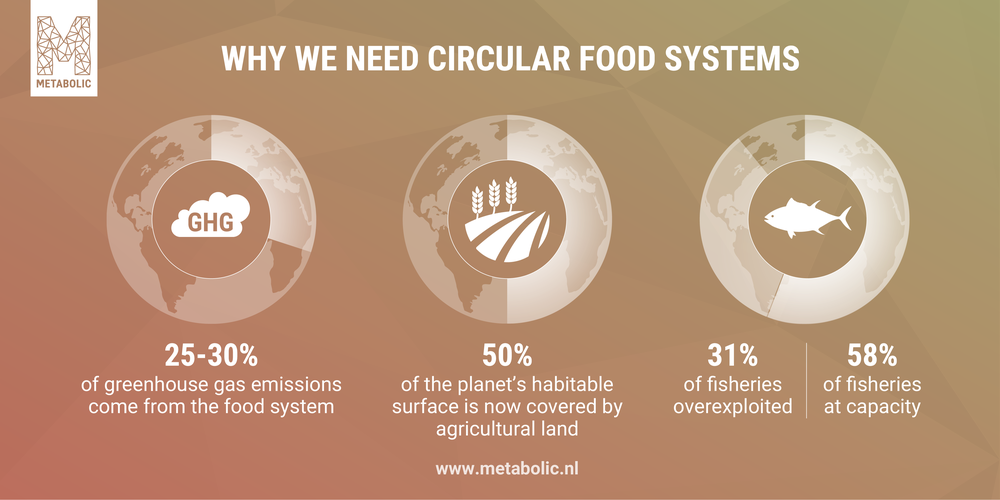 Impact the food system has on the environment