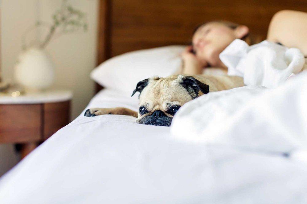 hoot-bed-sheets-dog