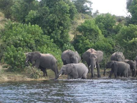 Chobe S. Africa.jpg