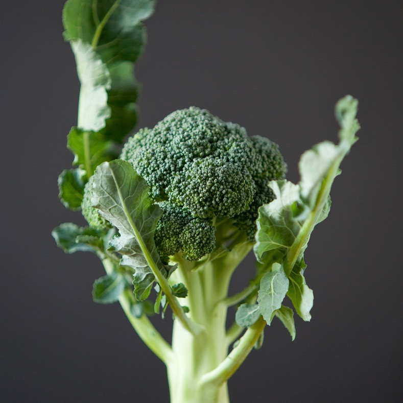 broccoli_on_grey.jpg