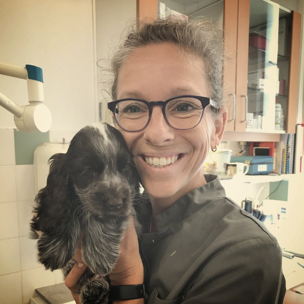 Michal OppenheimDierenartsMichal is sinds 2003 verbonden aan de dierenkliniek. Haar speciale interesses liggen bij de interne geneeskunde en echografie. Ook zeer angstige of boze katten zijn bij haar welkom: nagenoeg altijd lukt het haar, bijgestaan door een van onze paraveterinairen, ook deze dieren goed te onderzoeken en behandelen. -
