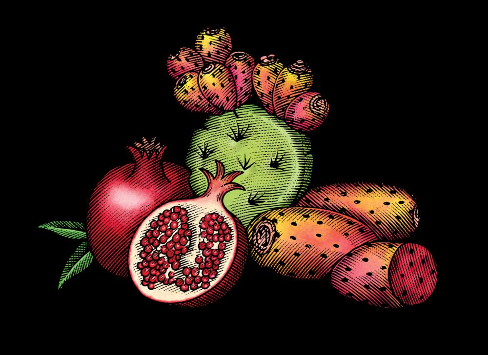 Cactus & Pomegranate