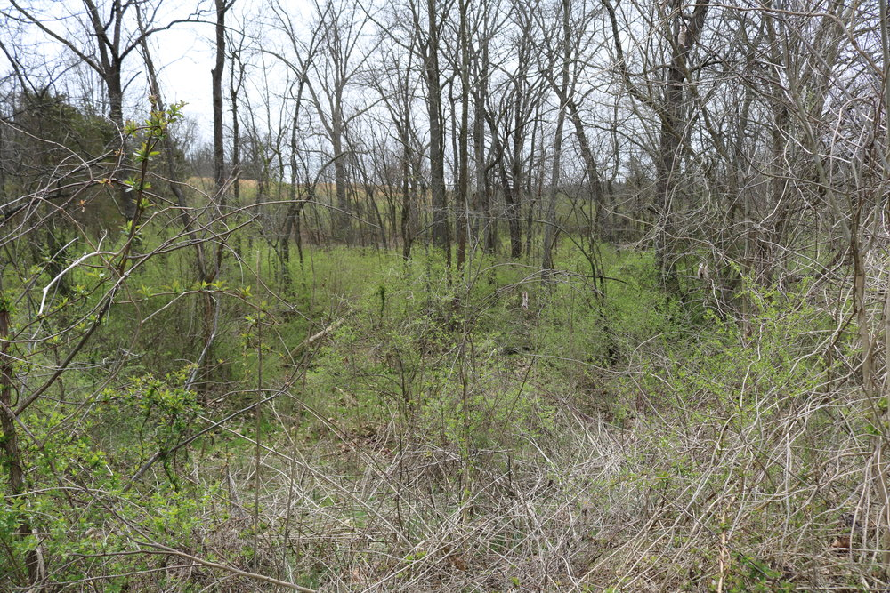 Most of the green in this picture is bush honeysuckle, an invasive plant that dominates much of this woodland. This woodland didn't always look like this, but the threat is always present. Plants often begin their spread unnoticed and catch us unaware. Scheduling periodic maintenance is essential to efficiently maintain a large landscape.   Image by Jody Thompson