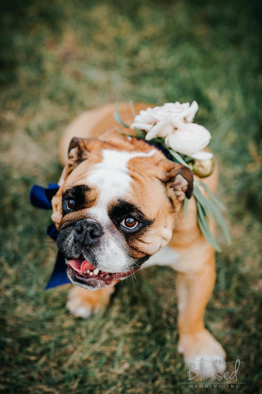 Destination Wedding Photography Minnesota By Blessed Wedding Photographers-31.jpg