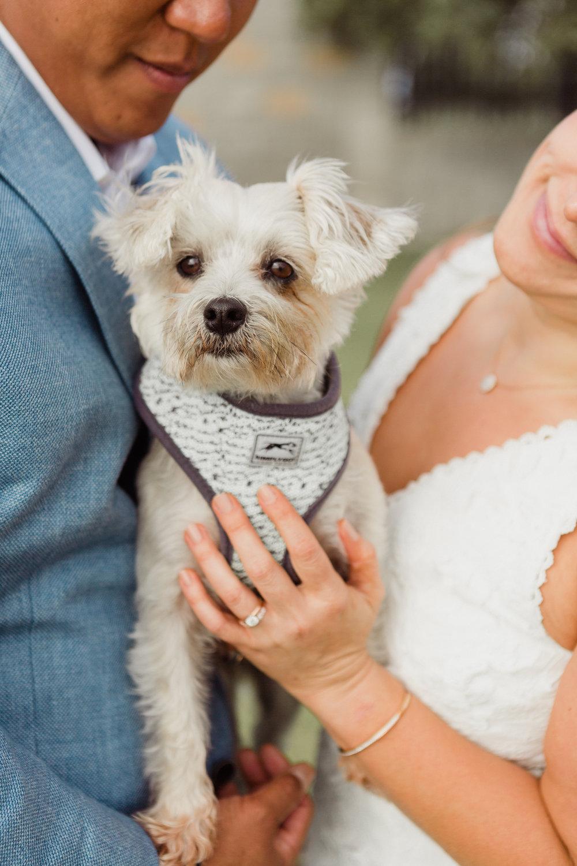 Coronado Elopement with dog Wedding Portraits by San Diego Wedding Photographers