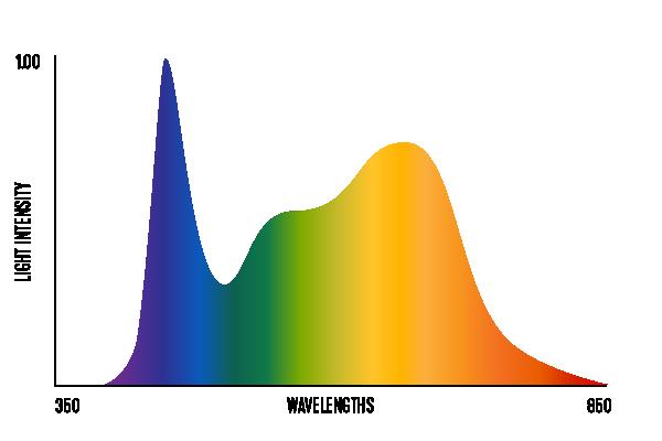 veg-spectrum@2x.png