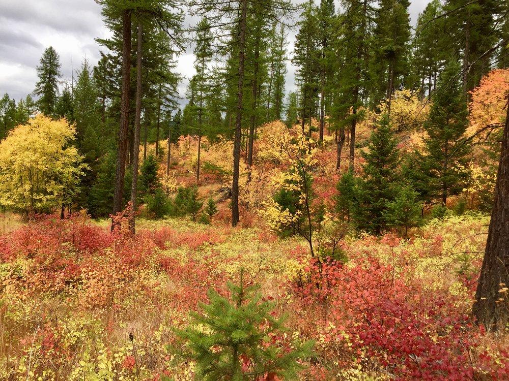 foys to blacktail trails trail marathon ftbtIMG_6642.JPG
