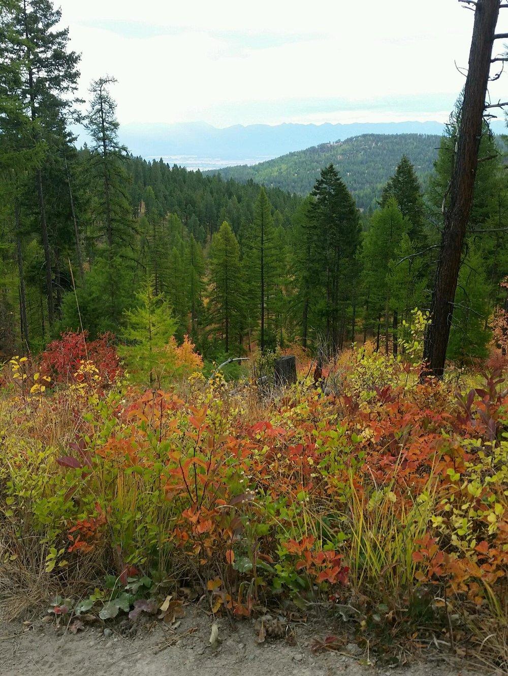 foys to blacktail trails trail marathon ftbtIMG_1773.JPG