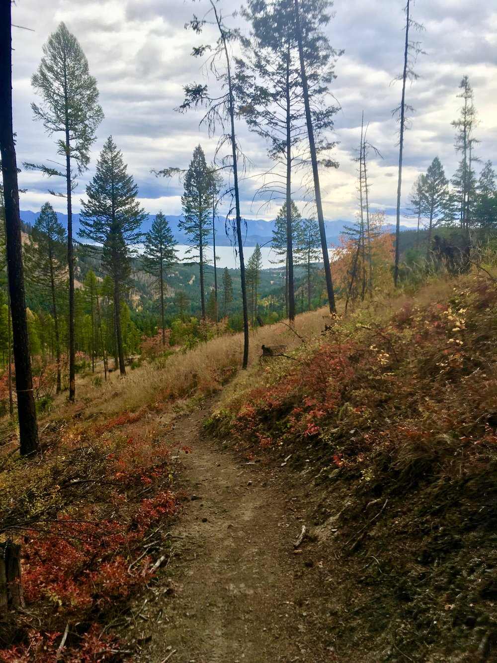 foys to blacktail trails trail marathon ftbtIMG_1716.JPG
