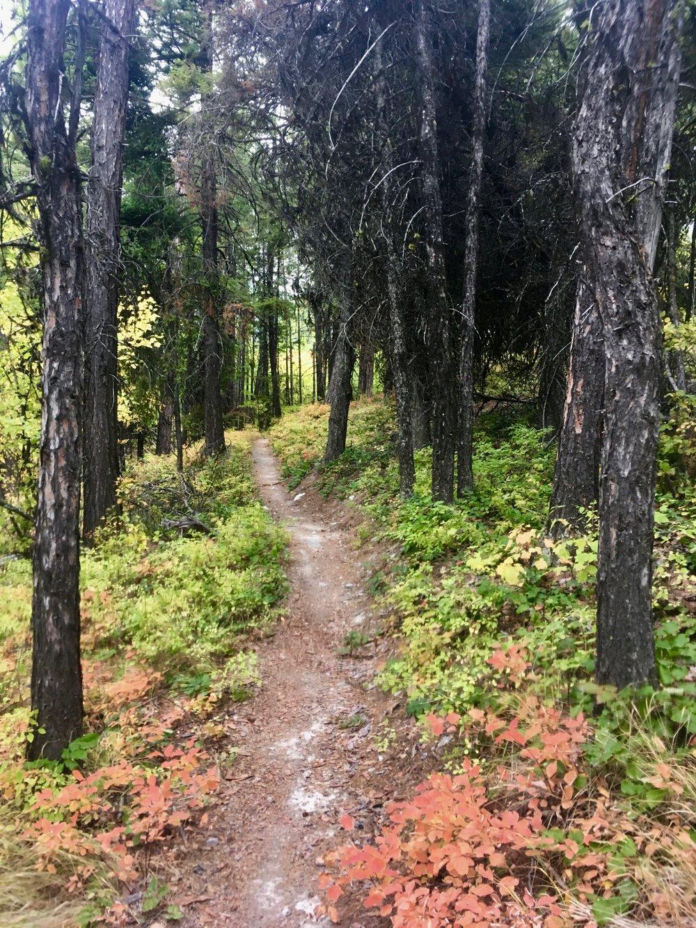 foys to blacktail trails trail marathon ftbtIMG_1721.JPG