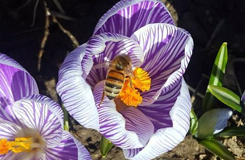 Flower & Bee.jpeg