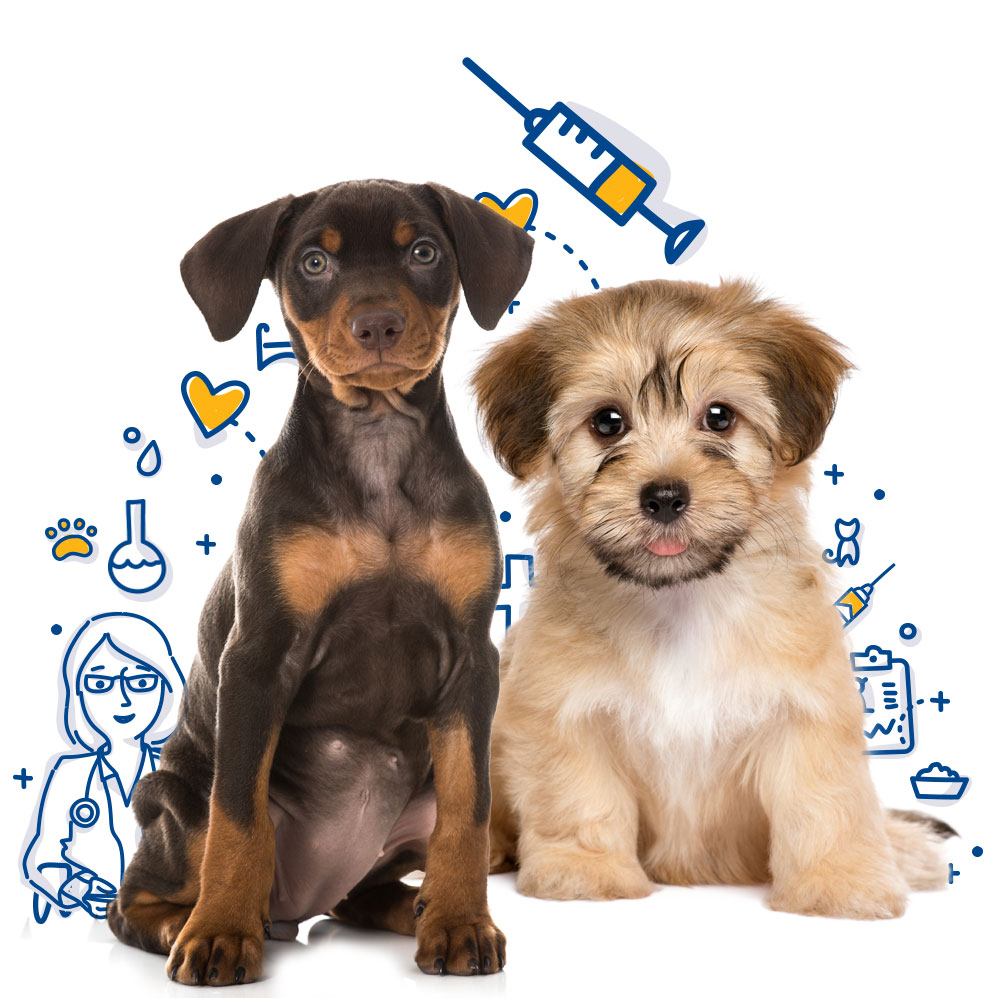 dog and cat vaccinations