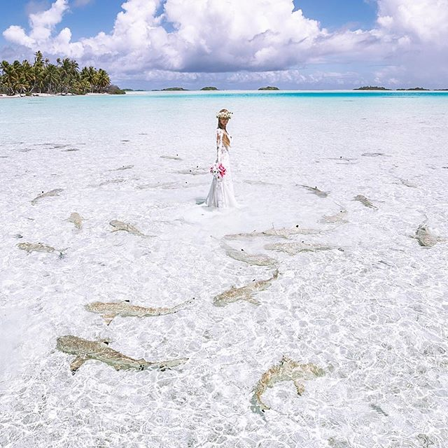 I'm supposed to be in this photo with @oceanramsey but as a photographer I couldn't help my self from grabbing the camera and  taking some photos of my beautiful bride in her element surrounded by sharks.  Love you @oceanramsey thank you for being my wife and my muse ❤️ #Sharkbride #sharkwedding #ocean #sharks #surroundedbysharks #mrsshark #mrshark #mrandmrsshark #paradise #beautiful #gorgeous #beautifulwomen #inspiringwomen #oceanramsey #oceanramseyshark #oneocean  #wedding #sharks #weddingready #heaven #beautiful