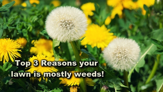 top 3 reasons your lawn is mostly weeds salt lake city lawn care gr8.jpg