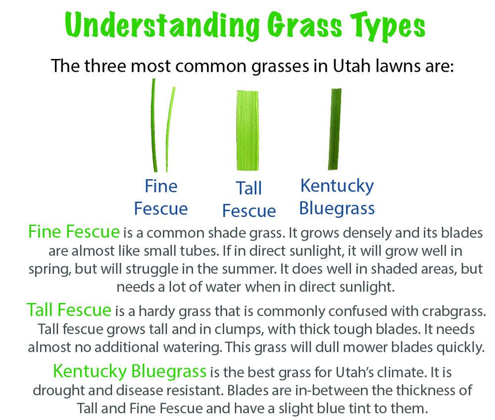 Salt Lake City common Grass Types fine fescue tall fescue kentucky bluegrass.jpg