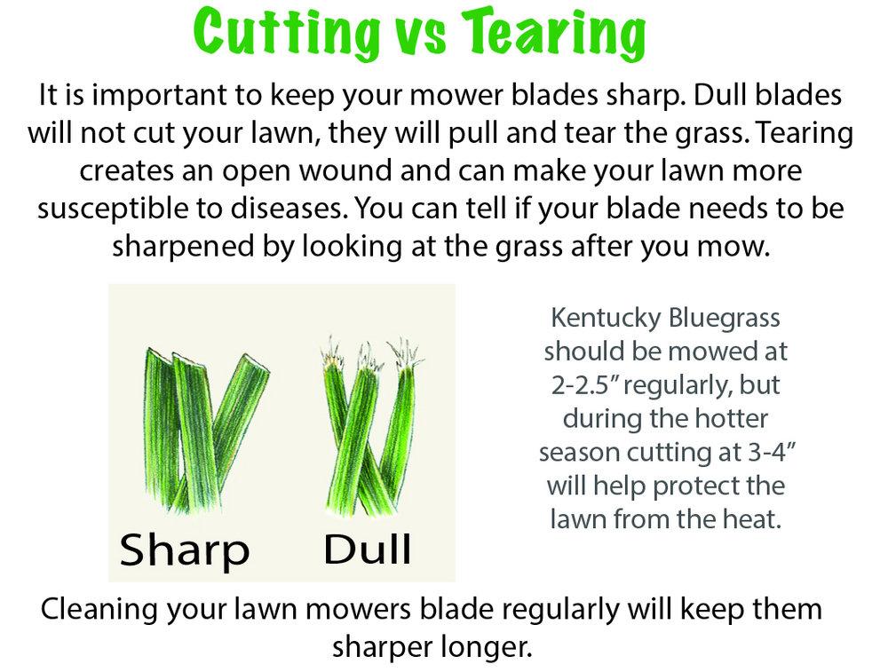 Dull Blaedes vs Sharp Blades cutting grass salt lake city GR8 Lawn Care.jpg
