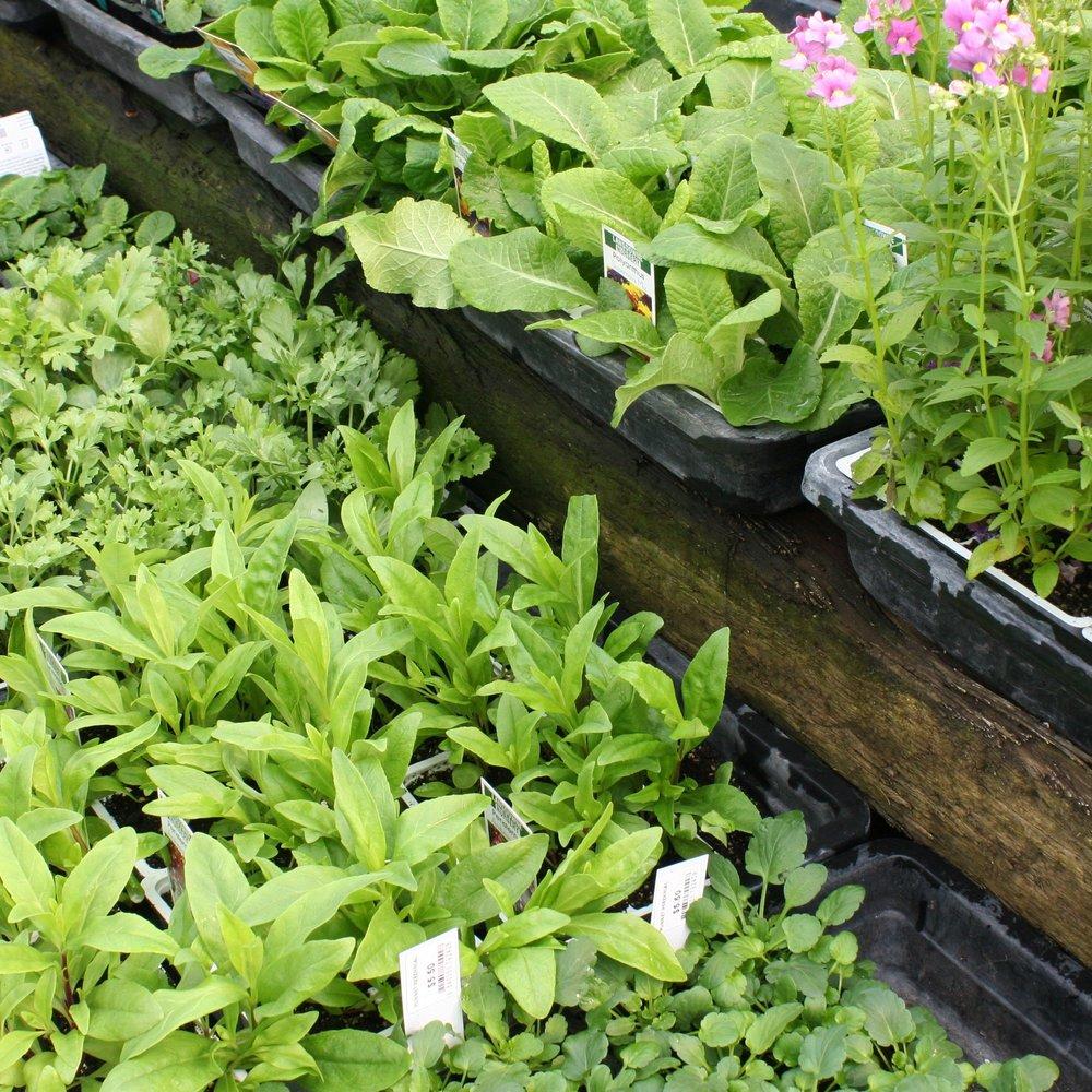 Perennial Punnets2 for $8 -