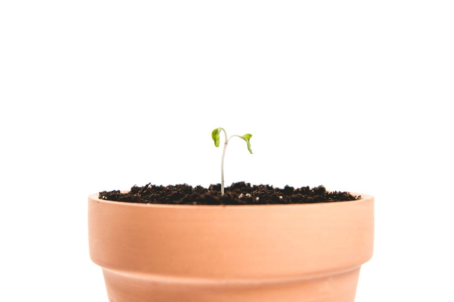 pot-with-a-single-sprout_925x.jpg