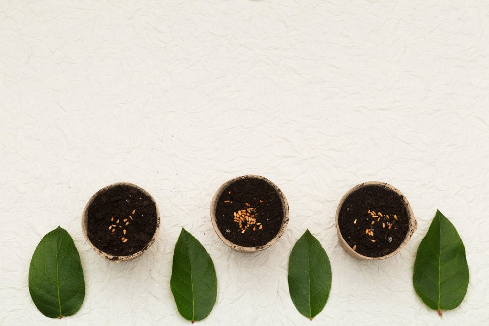 pots-seeds-and-leaves_4460x4460.jpg