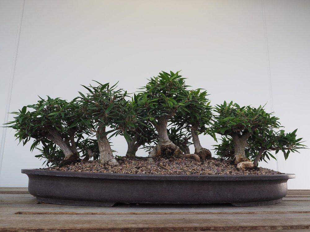 bonsai-2347165_1280.jpg