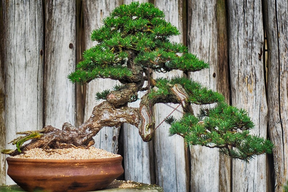 wood-3441147_1280.jpg