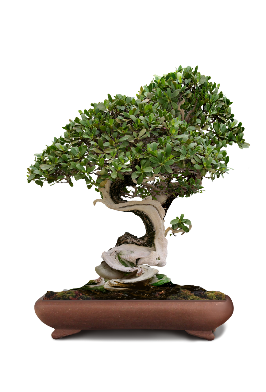 bonsai-1856731_1280.png